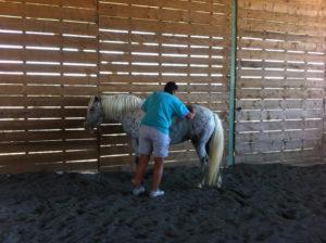 Equitation-gem-ales
